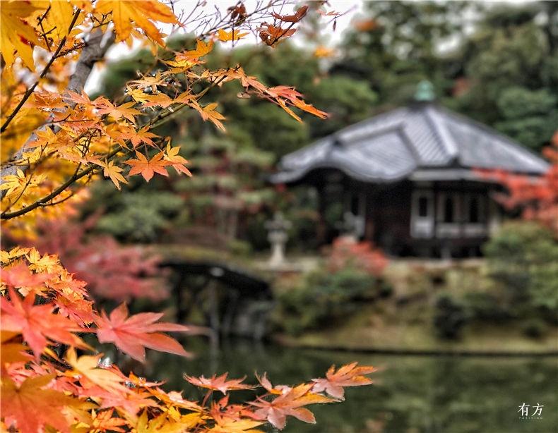 0日本之美庭园之心04