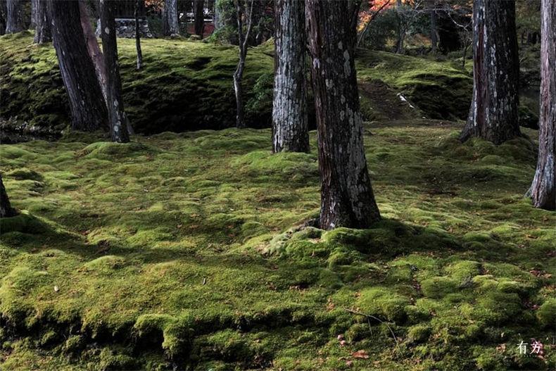 0日本之美庭园之心08