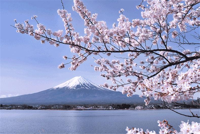 0日本赏樱必住酒店14