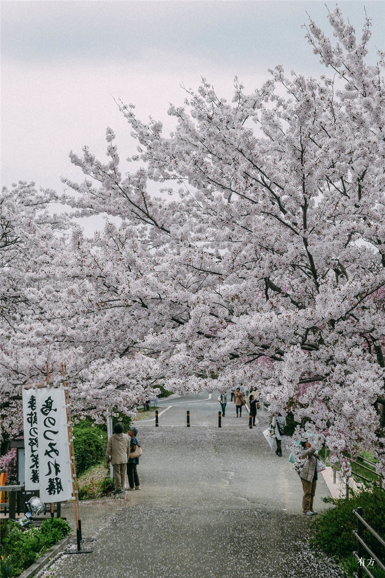 0日本赏樱必住酒店36
